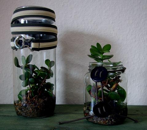 Pflanzengläser