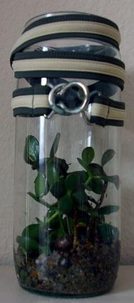 Pflanze im Glas